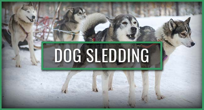 Snowbank Lodge and Outfitters Dog Sledding